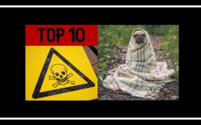 Top 10 dangerous dogs in the world that can kill a human