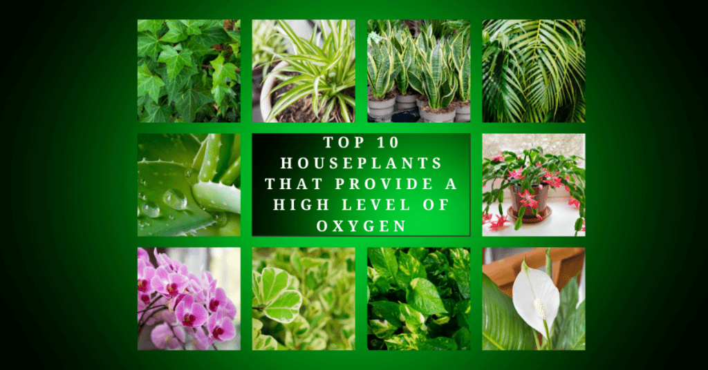 10 Best Indoor Plants To Purify The Air In Your Home